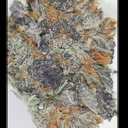 Black Kush ($160.00 Ounce)
