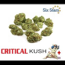 Critical Kush