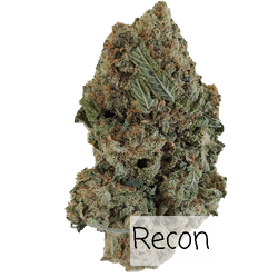 Recon - indica Dominate