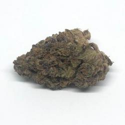 Purple Pugs Breath (AAAA)