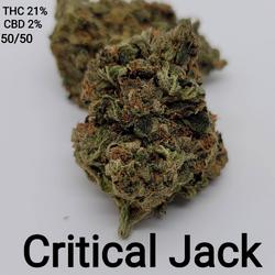 Critical Jack AAAA 50/50 Hybrid