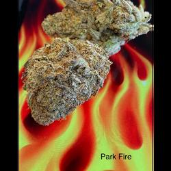 PARK FIRE AAAAA