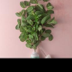 Mint THC Elixir - 1000mg