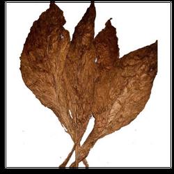 Grabba 2 leaves