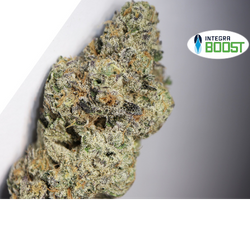 Biscotti by Cookies Fam (5star Exotic) *rare*