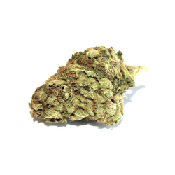 *SALE* GORILLA GLUE #4 [AA+] HYBRID 22% THC