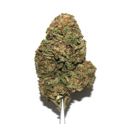 *CLEARANCE* BUBBLEGUM KUSH [AA] INDICA 20% THC