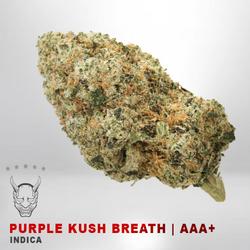 Purple Kush Breath - AAA+ - INDICA