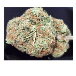 MASTER KUSH - 20-24% THC - Special Price $135 an oz