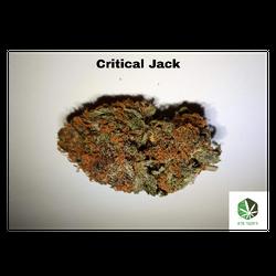 Critical Jack