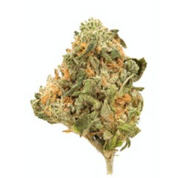 Girl Scout Cookies AAA- Indica Dominate