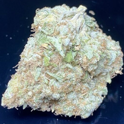 Acapulco Gold (THC 24%) AAA- 50% only 140 OZ