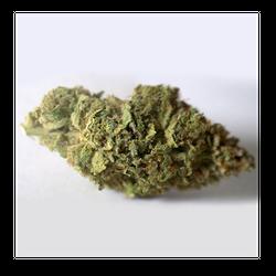 9 Pound Hammer    80% Indica / 20% Sativa   THC: 23%