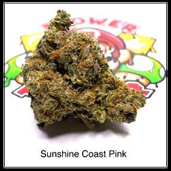 """AAAA"" Sunshine Coast Pink"