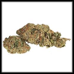 Purple Cheese - Hybrid - 27%