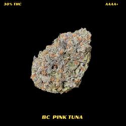 AAAA+ PINK TUNA( QUAD-NEW)
