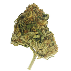 (AAA+) Pink Panther – INDICA