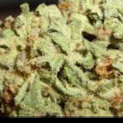 Blue Cheese Kush - $120