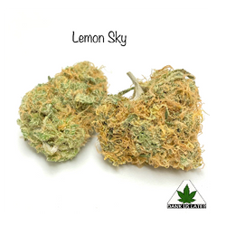 (New) Lemon Skywalker ++AAAA??