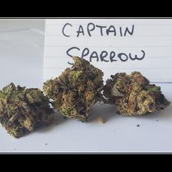 Captain Sparrow BC HIGH LEVEL