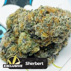 MediFix - Sherbert