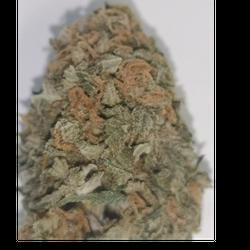 ****SPECIAL $60.00 OZ ***** Green Polar Bear