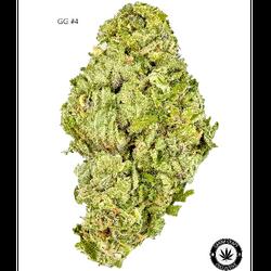 AA+ – GG#4 – $100-OZ $150-2OZ