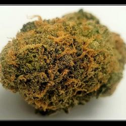 Mawi Wowie – Hybrid (80%Sativa) – THC 28%