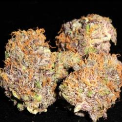 Purple Kush AAA Indica Dominate