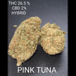 PINK TUNA (4 STARS)