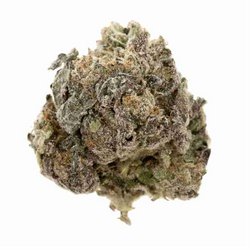 PINK ORGY - INDICA