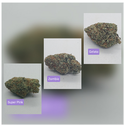 Premium Strains Variety Pack *Check Description For Pricing and Strains*