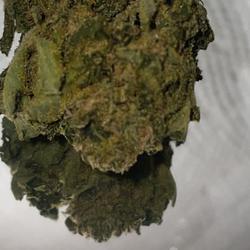 🔥🔥THOR'S HAMMMER🔥🔥 23%THC