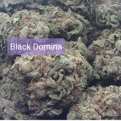 *Exotic* Black Domina(Indica) *Smooth And Clean Burn*