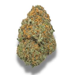 *SALE* BLUE CHEESE [AAA+] SATIVA 24% THC