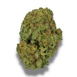 *NEW* WHITE ZOMBIE [AAA+] HYBRID 23% THC