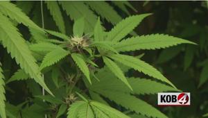 Recreational marijuana bill clears legislature, heads to governor's desk