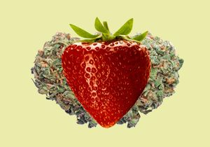 The 101 of Strawberry Cannabis Strain