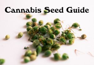 Cannabis Seed Guide
