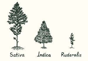 SATIVA. INDICA. DOES IT MATTER?