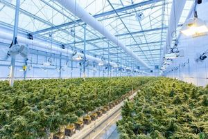 Highlife Cannabis Co. successfully open its second location in North York