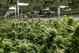 Six Ways to Increase Your Yield