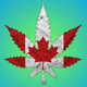 [24/7] Fresh Bud Company logo